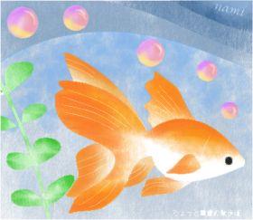 goldfishsss_nami2